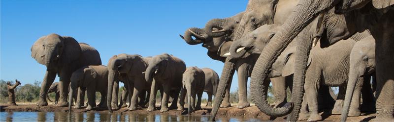 Wildlife Safaris in Tanzania