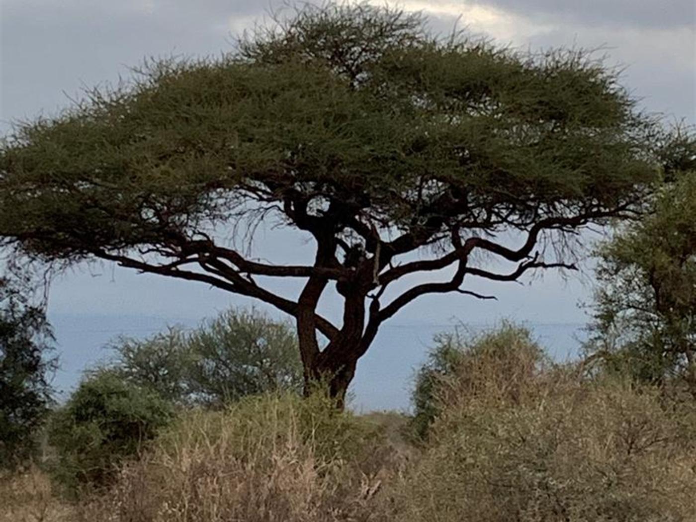 Recreational Land for sale in Nairobi  International