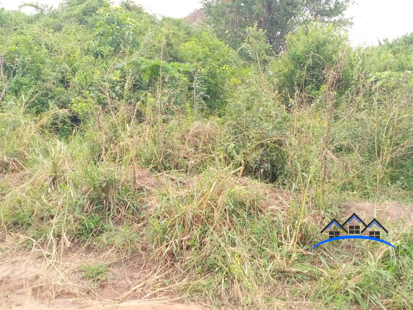 Agricultural Land for sale in Mulunya Kiboga