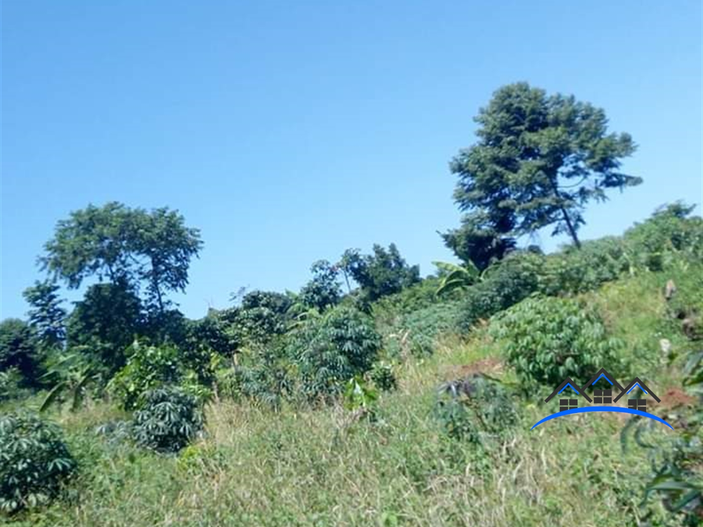 Agricultural Land for sale in Nkokonjeru Mukono