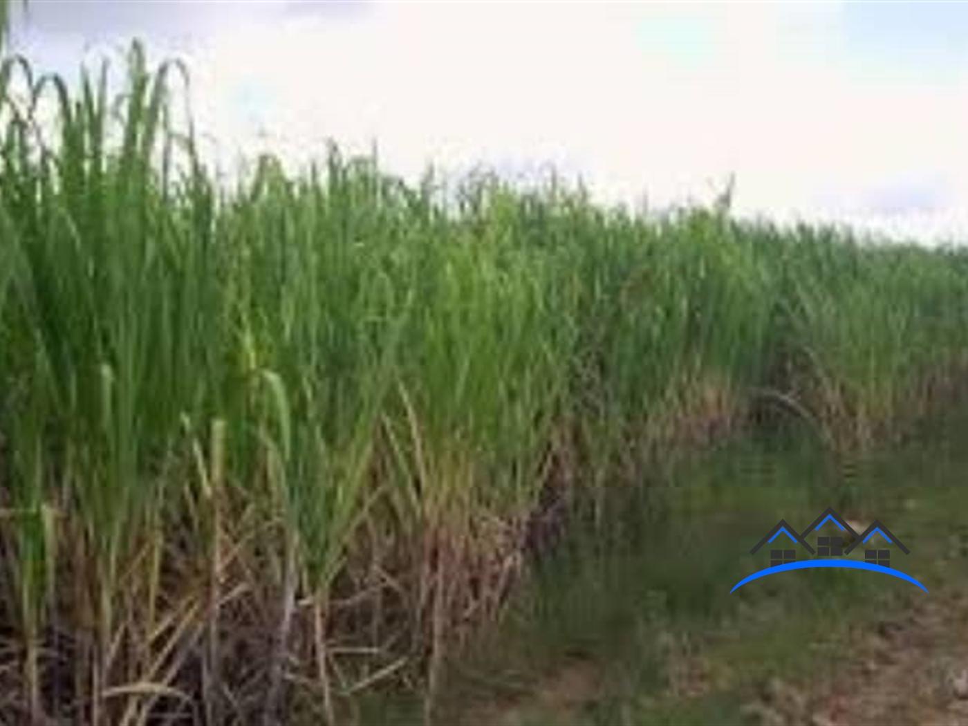 Agricultural Land for sale in Masindi Masindi