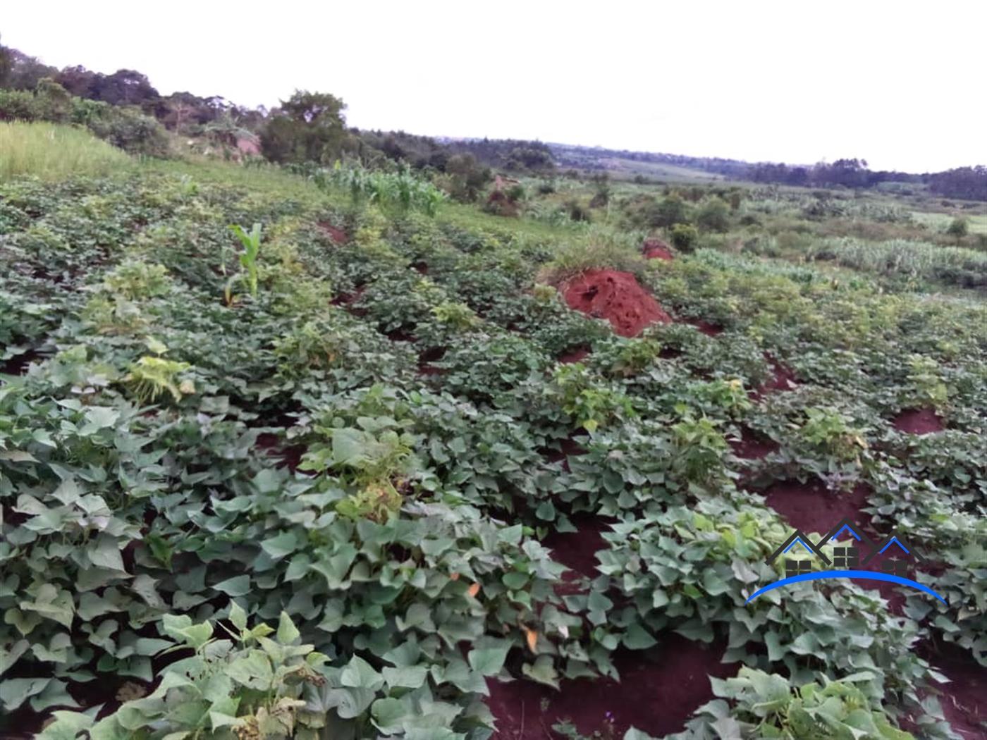 Residential Land for sale in Kijabijo Mukono
