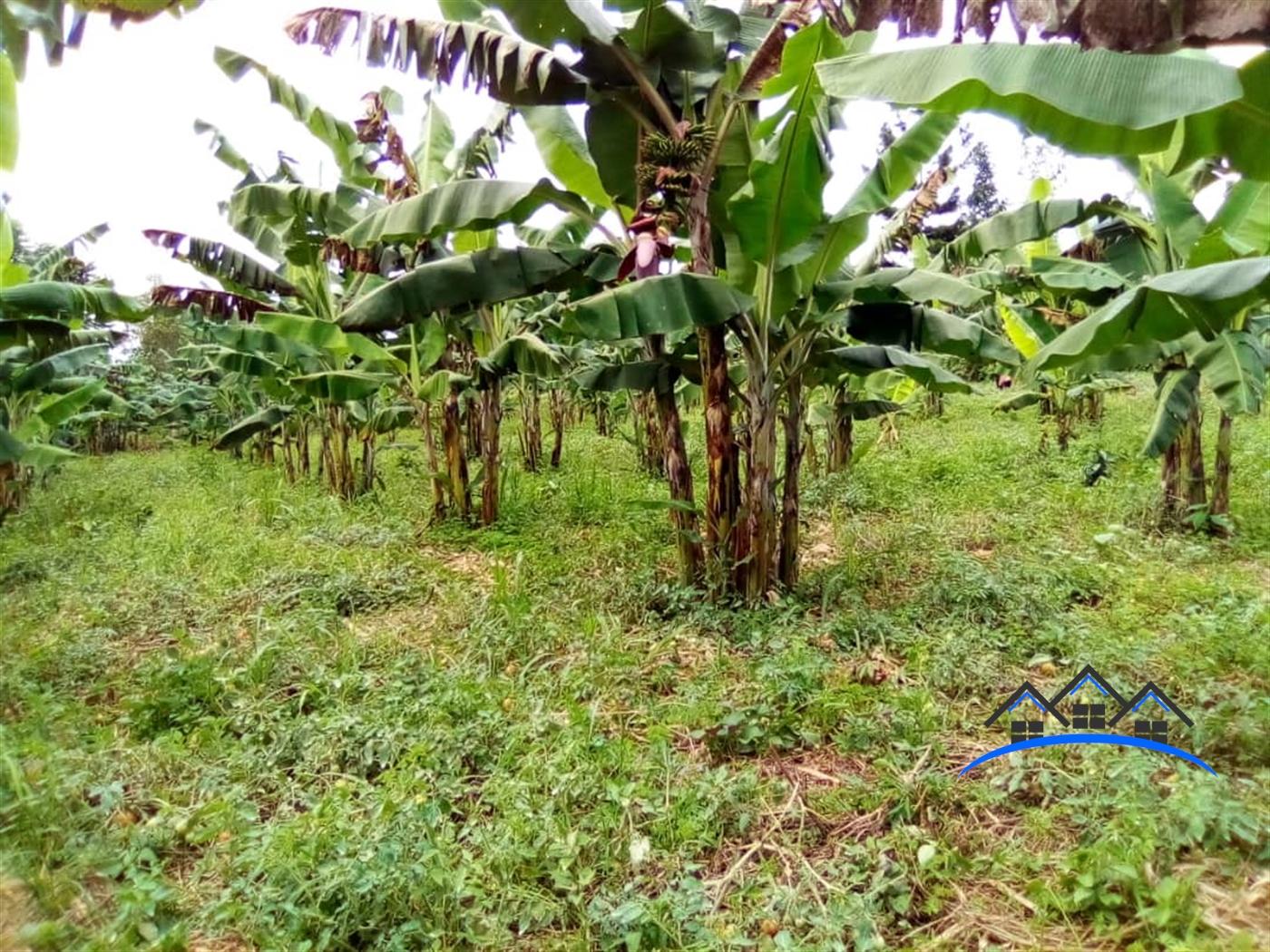 Residential Land for sale in Ntenjjeru Mukono