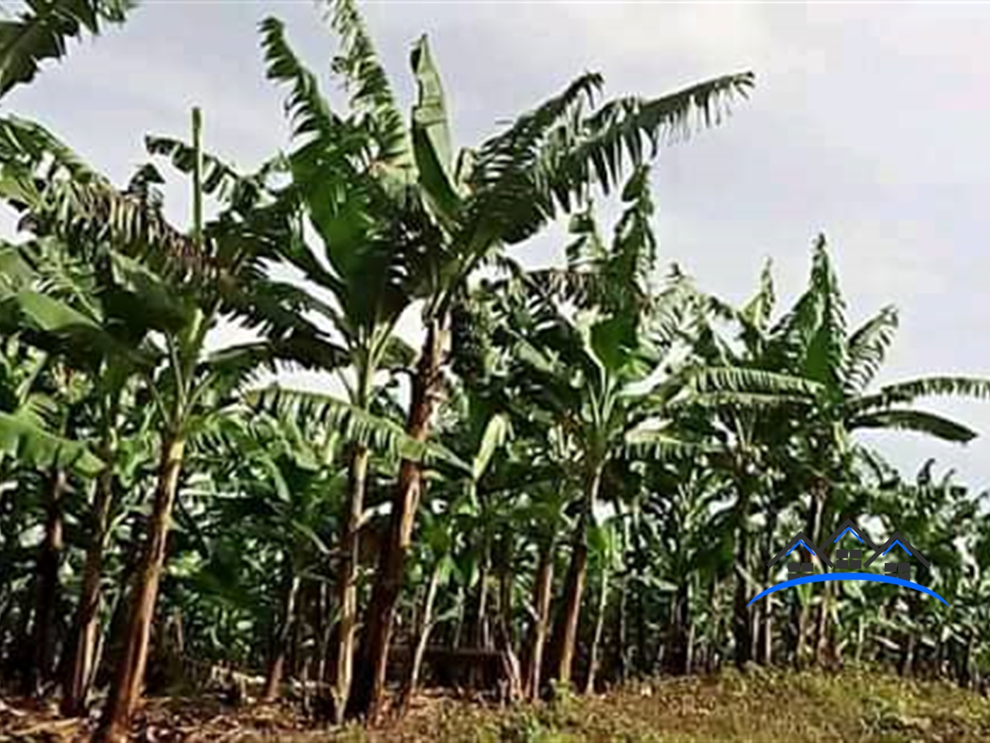 Agricultural Land for sale in Katera Wakiso