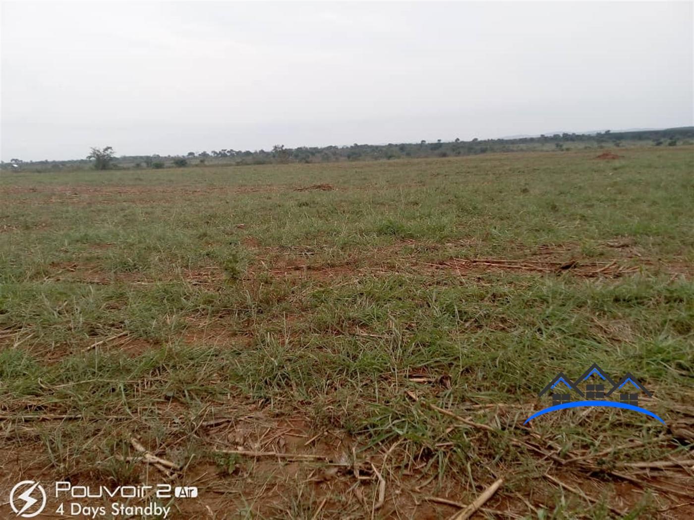Agricultural Land for sale in Butalangu Nakaseke