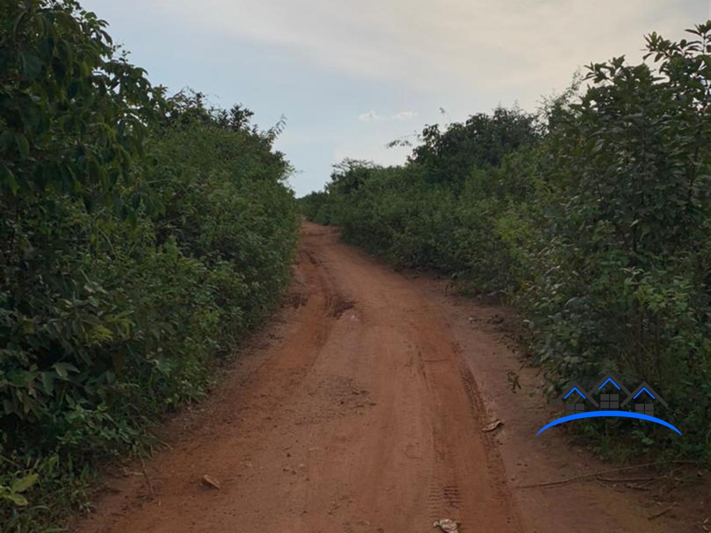 Agricultural Land for sale in Kabunyata Luwero