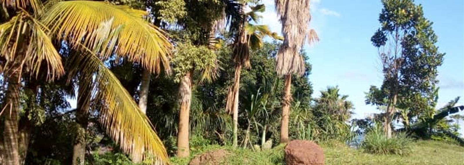 Mbuya
