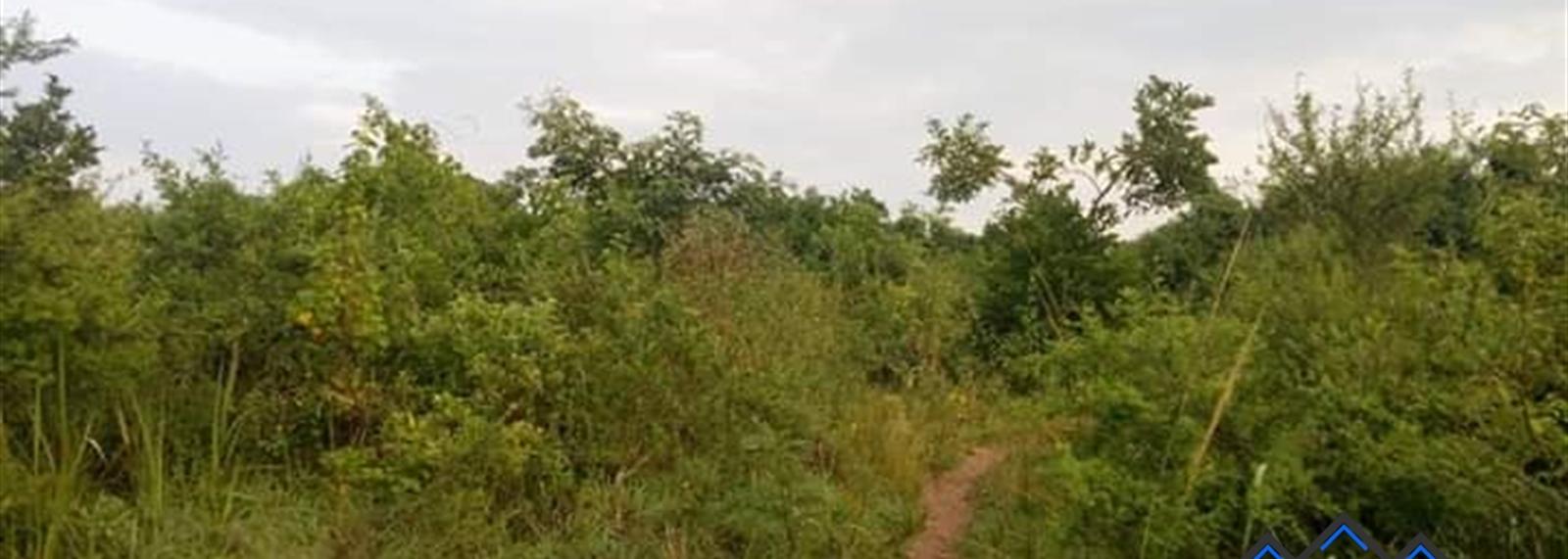 Ziroobwe