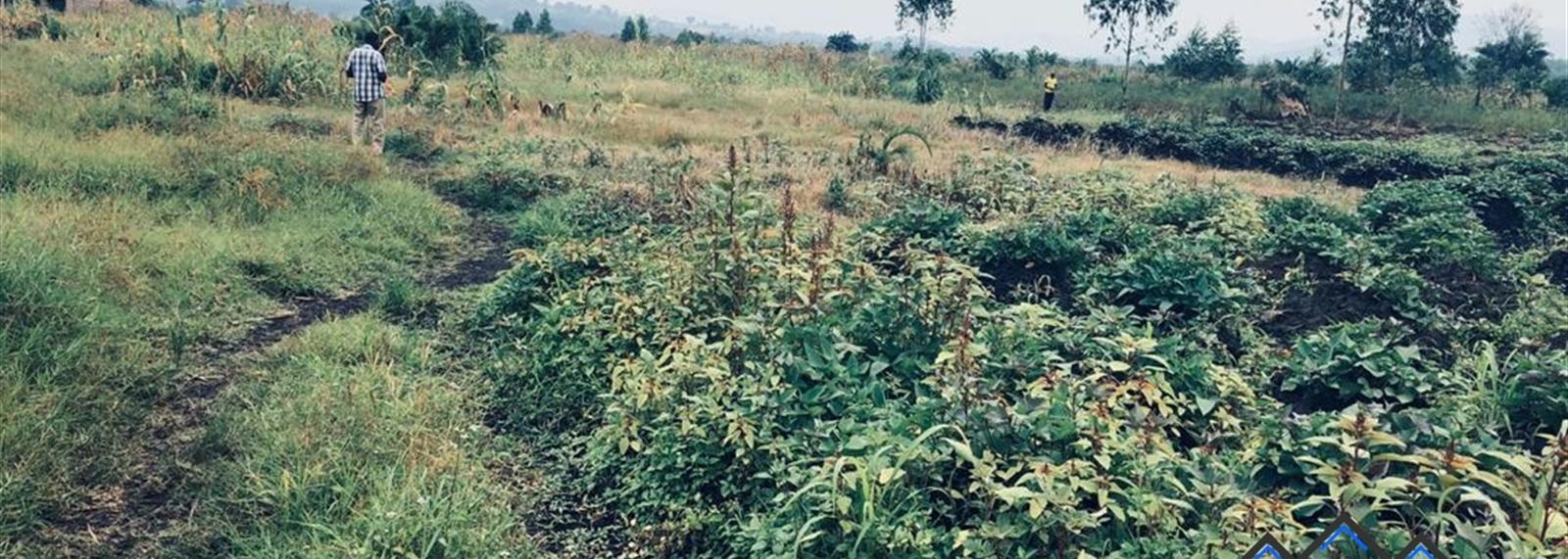Kisumula