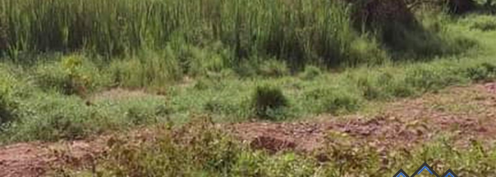 Kikandwa
