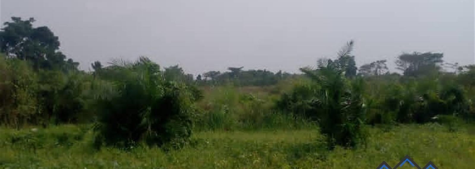 Butibulongo