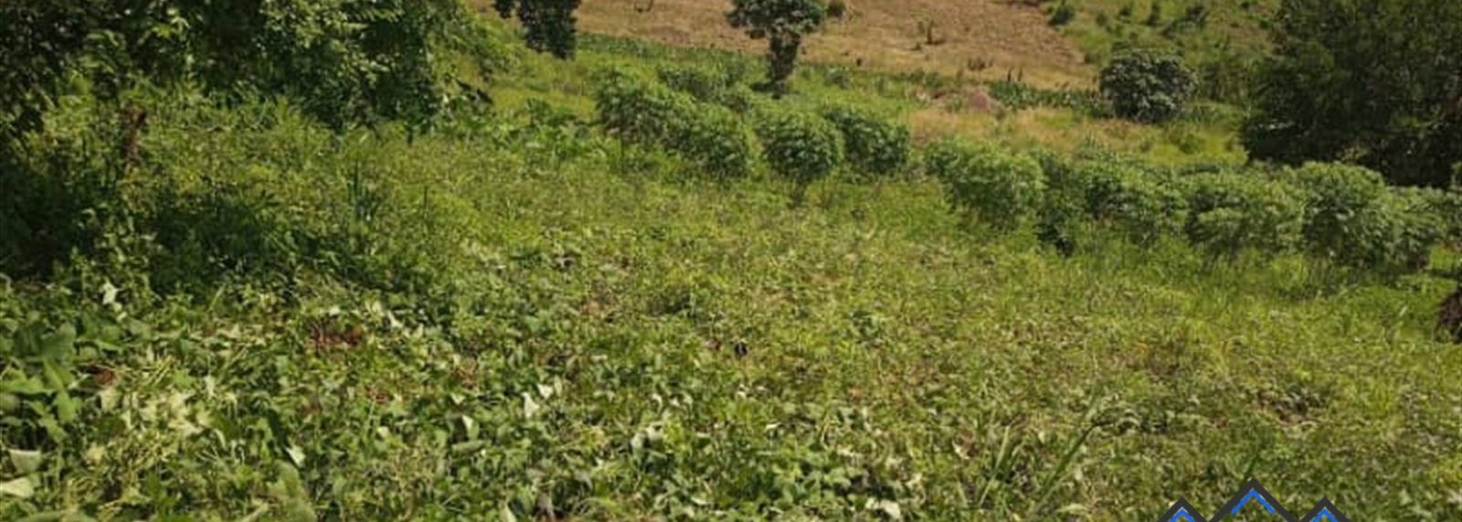 Lukumbi