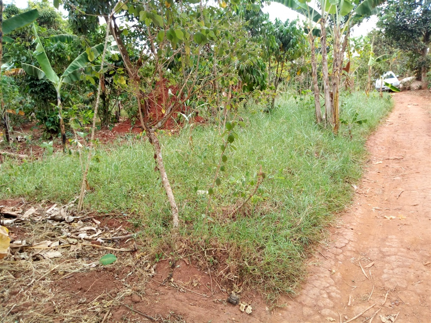 Residential Land for sale in Nkoowe Wakiso