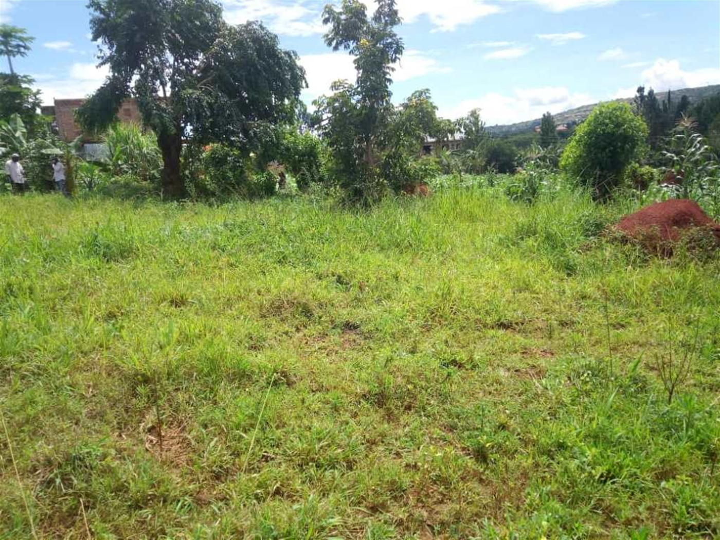 Multi Purpose Land for sale in Namungogo Wakiso