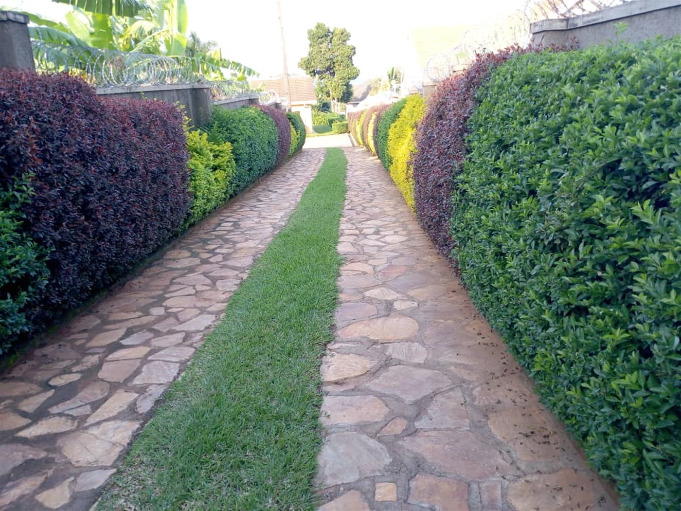 Bungalow for rent in Mnyonyou Kampala
