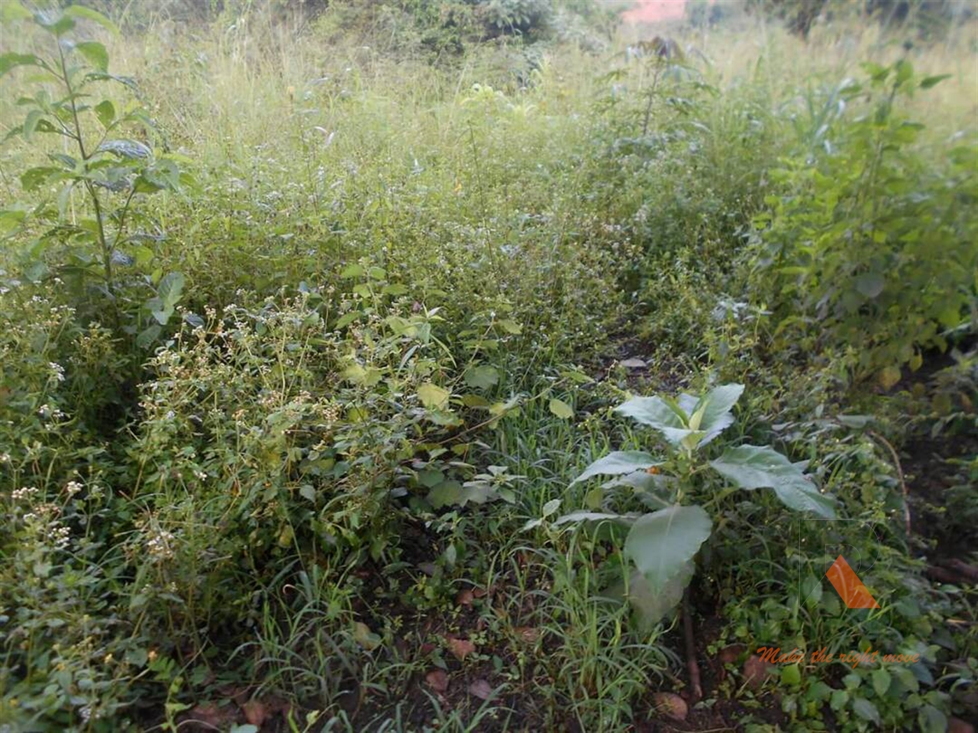 Agricultural Land for sale in Matugga Wakiso