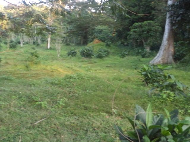 Residential Land for sale in Ssesseisland Masaka