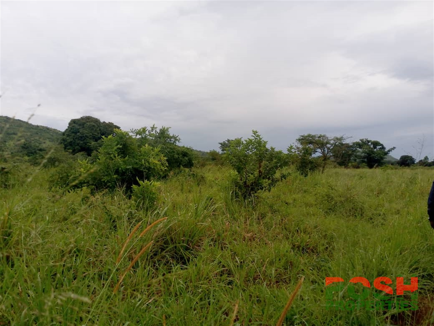 Commercial Land for sale in Lwamata Kiboga