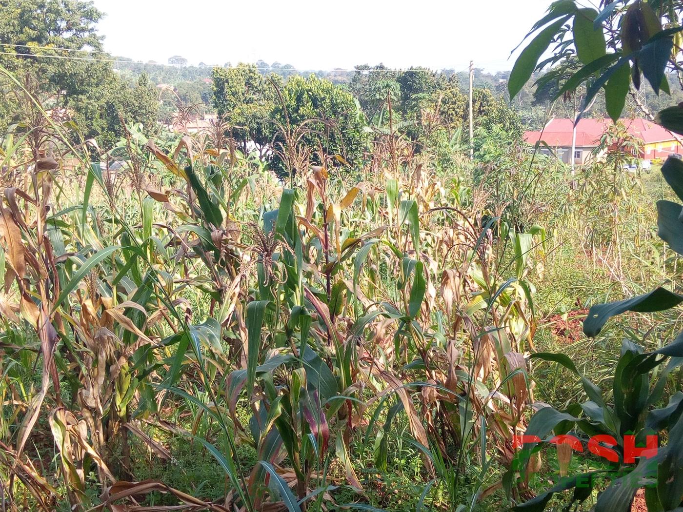 Residential Land for sale in Lugazi Mukono