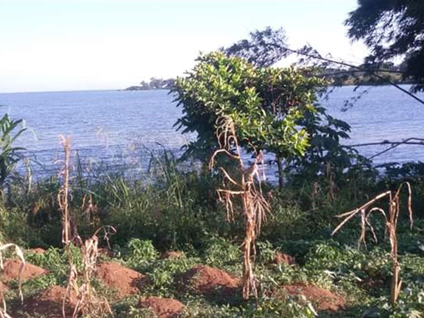 Multi Purpose Land for sale in Bugiri Wakiso