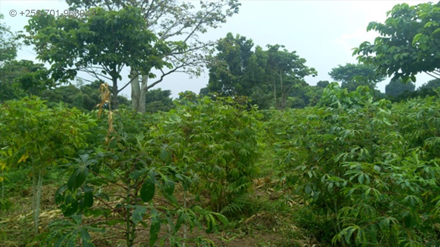 Commercial Land for sale in Garuga Wakiso
