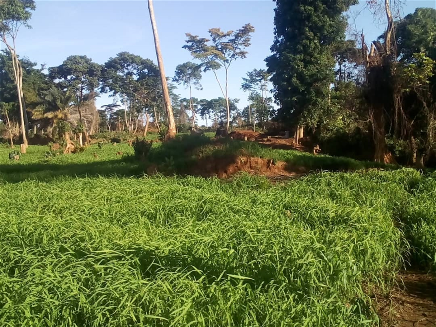 Agricultural Land for sale in Bugala Kalangala