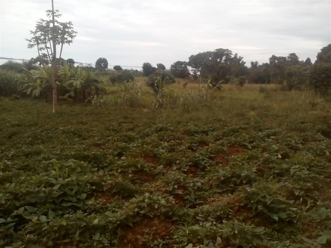 Recreational Land for sale in Buwaya Wakiso
