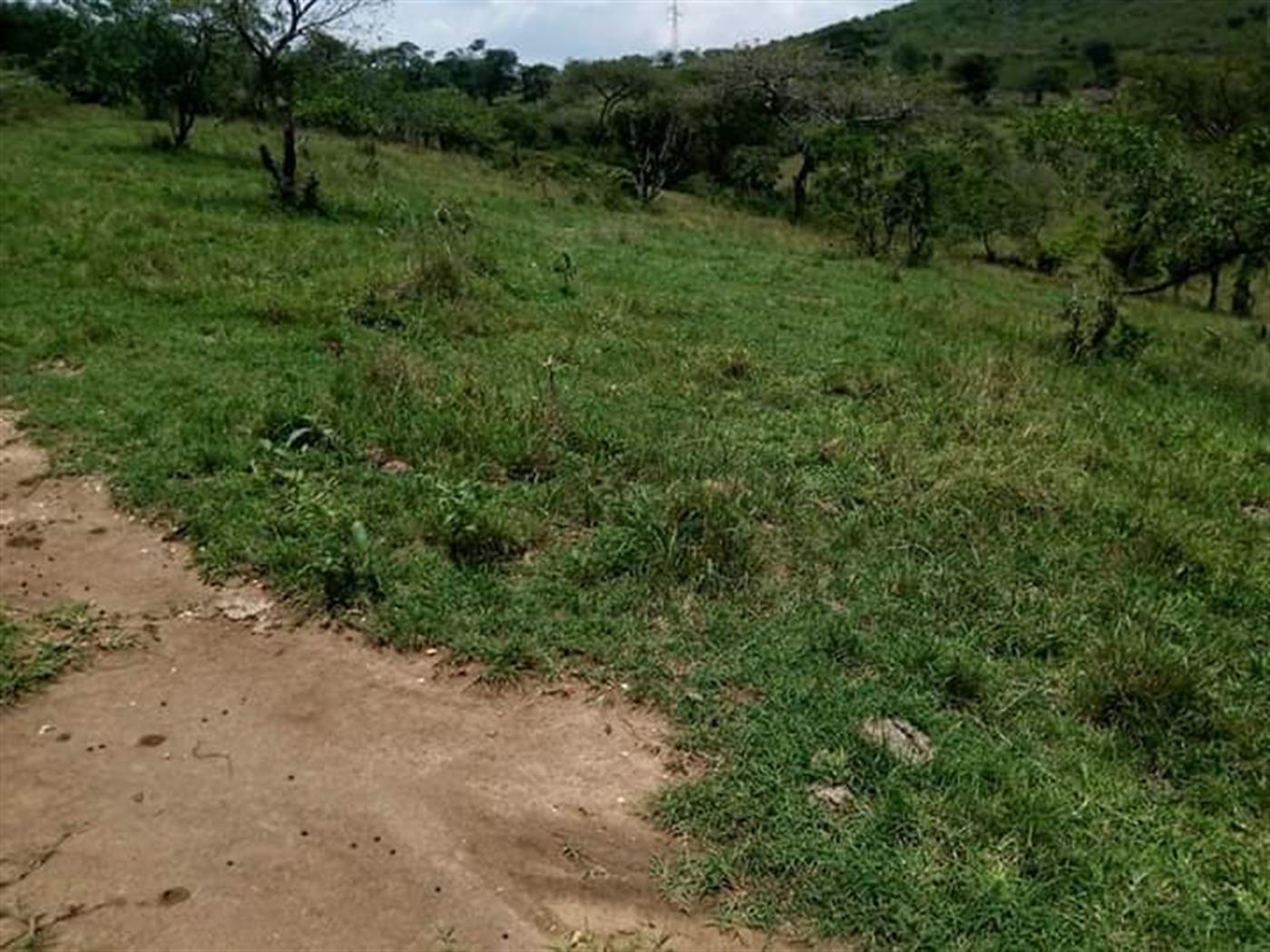 Agricultural Land for sale in Lyantonde Mbarara