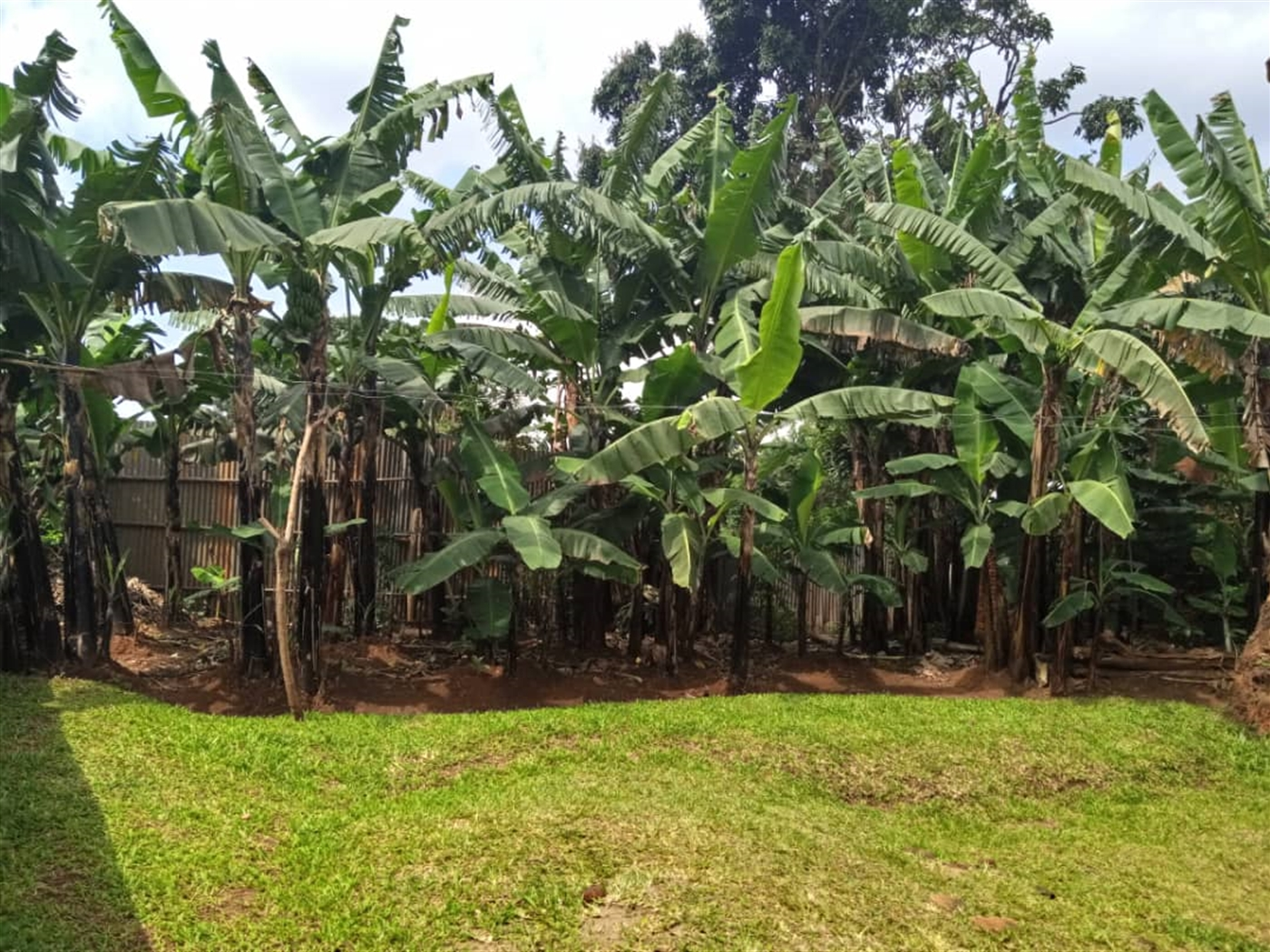 Bungalow for sale in Kirinya Wakiso