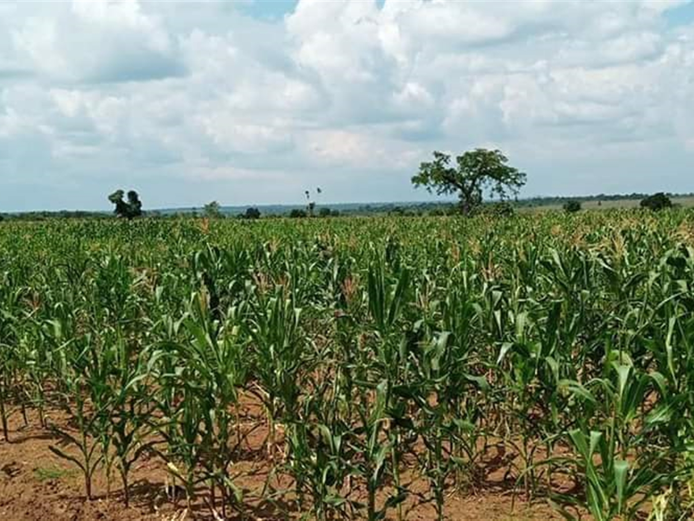 Agricultural Land for sale in Kikyusa Luwero