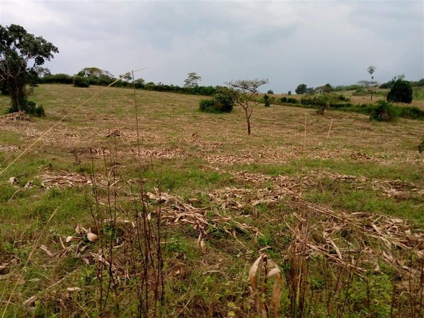 Multipurpose Land for sale in Rwamwanja Kamwenge