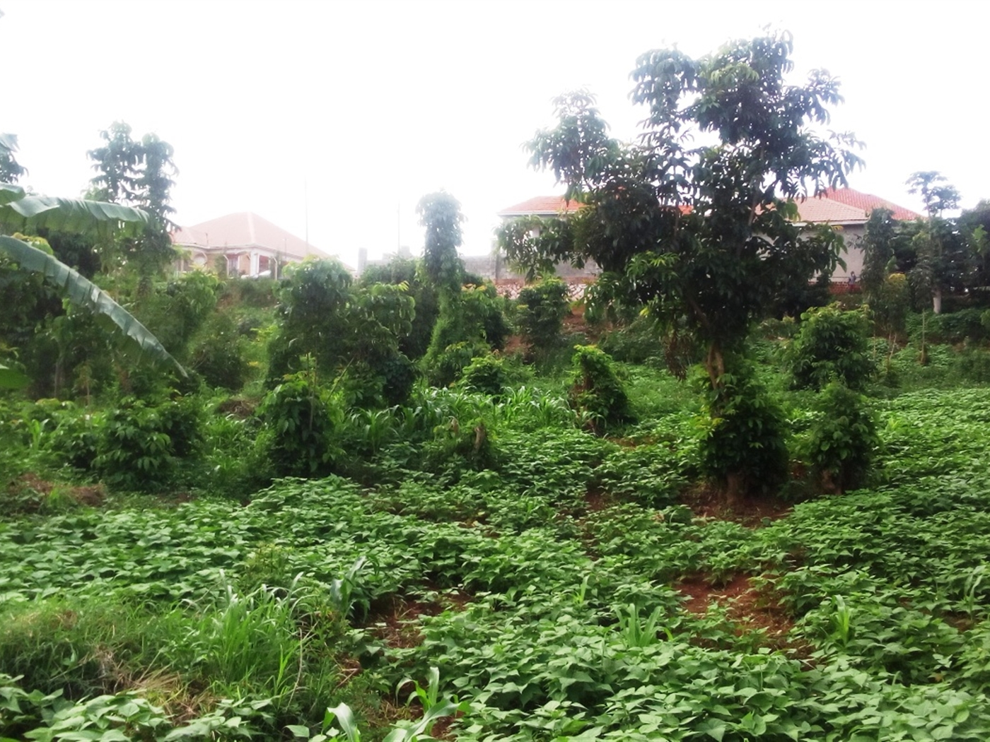 Multi Purpose Land for sale in Busaabala Kampala