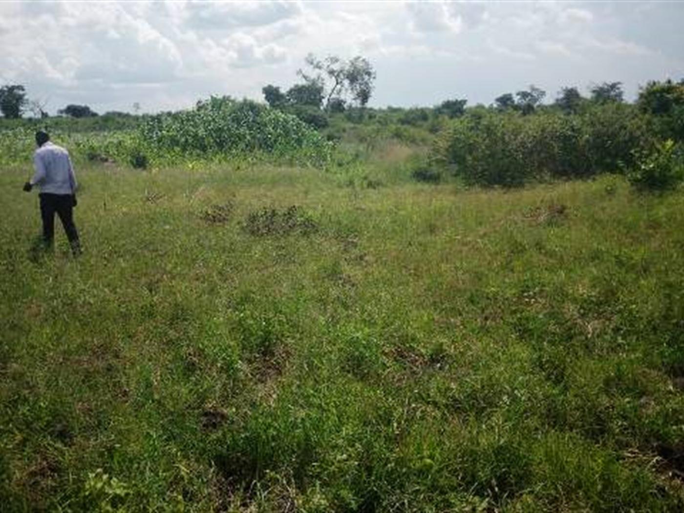 Multi Purpose Land for sale in Kapeeka Luwero