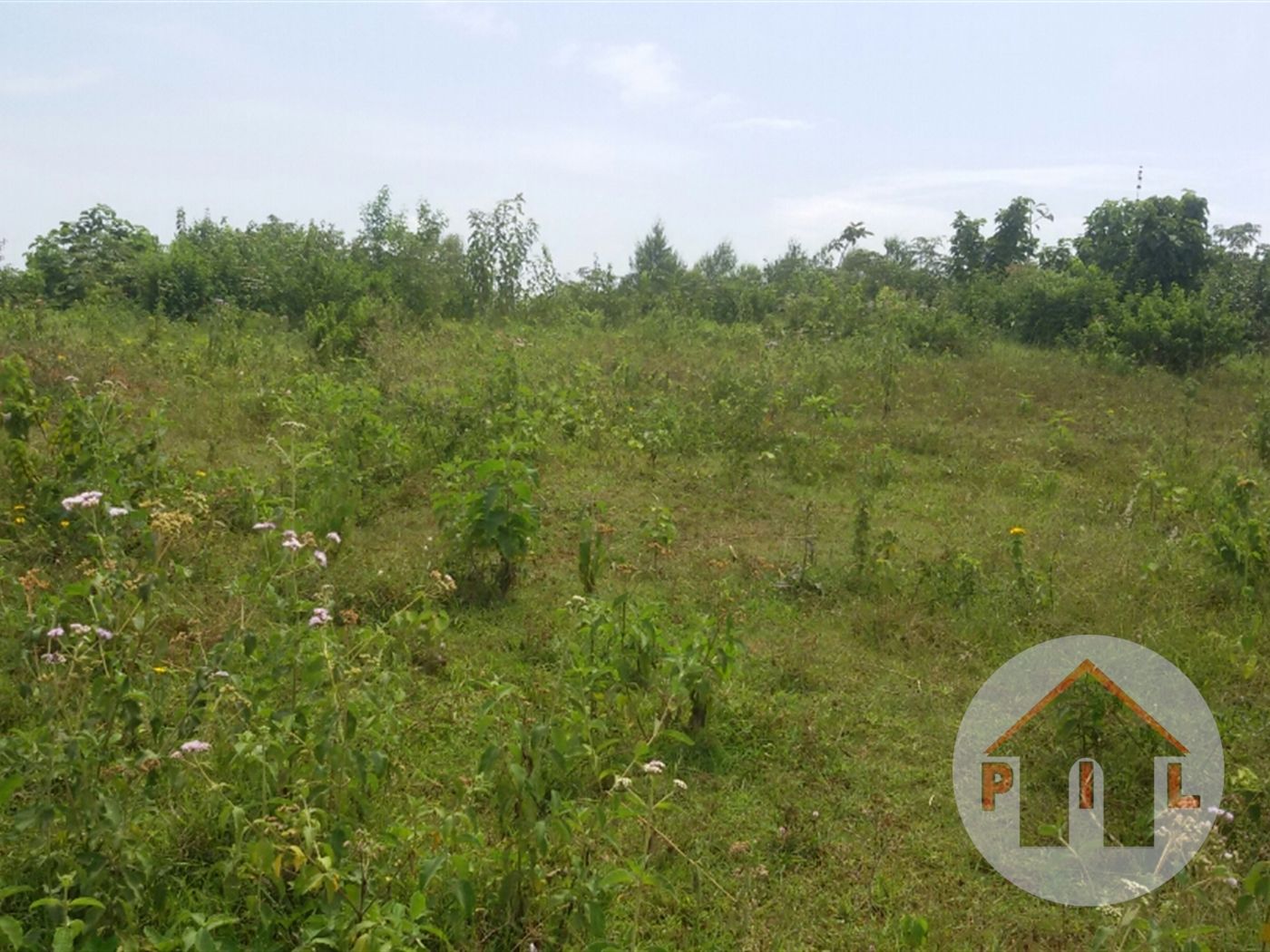 Agricultural Land for sale in Janda Luwero