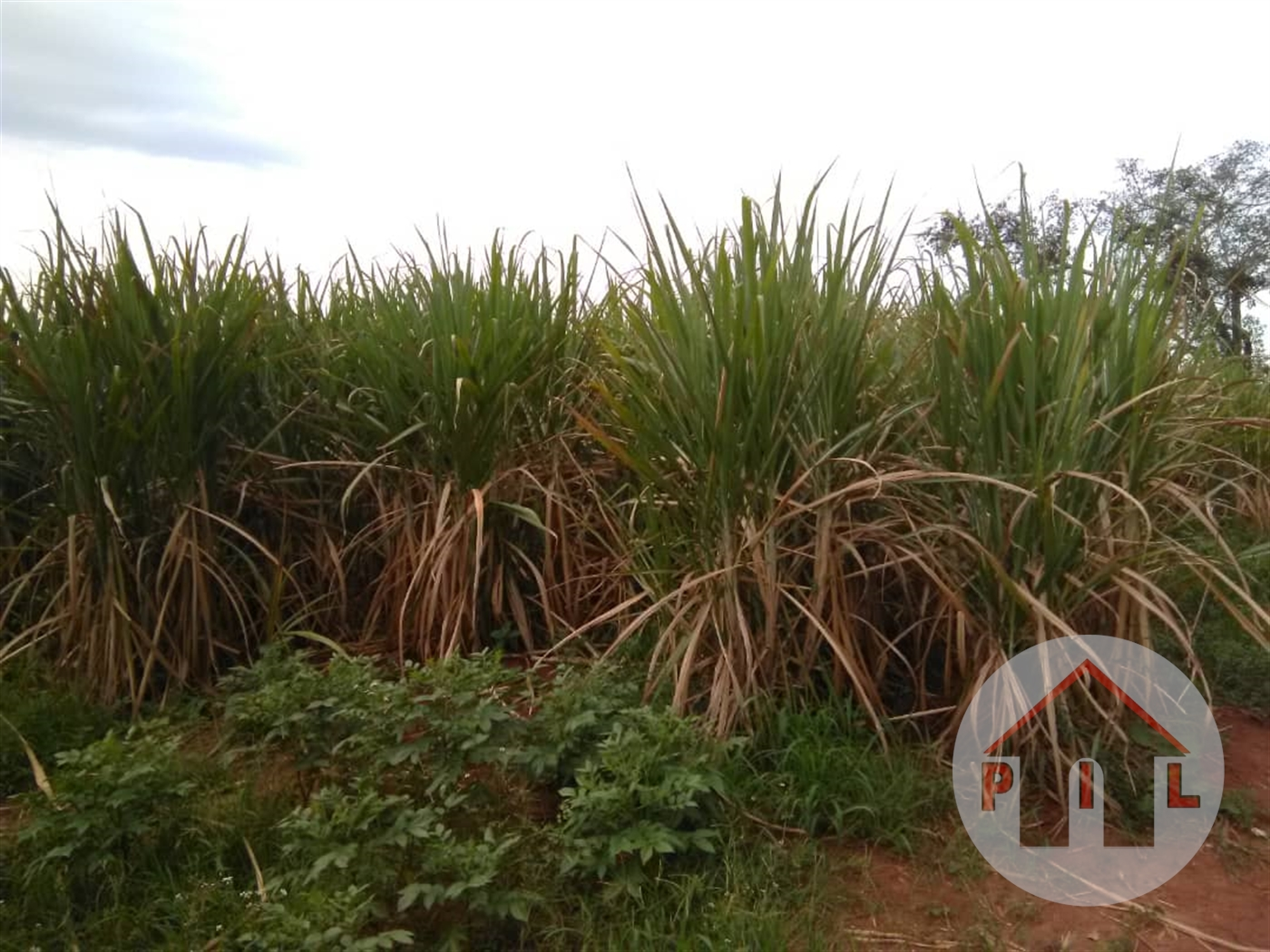 Residential Land for sale in Ndibulungi Luwero