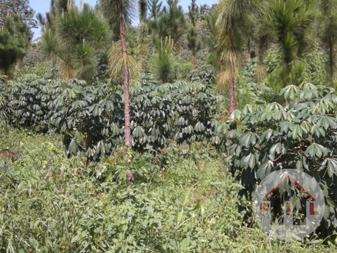 Agricultural Land for sale in Nakaseke Luwero