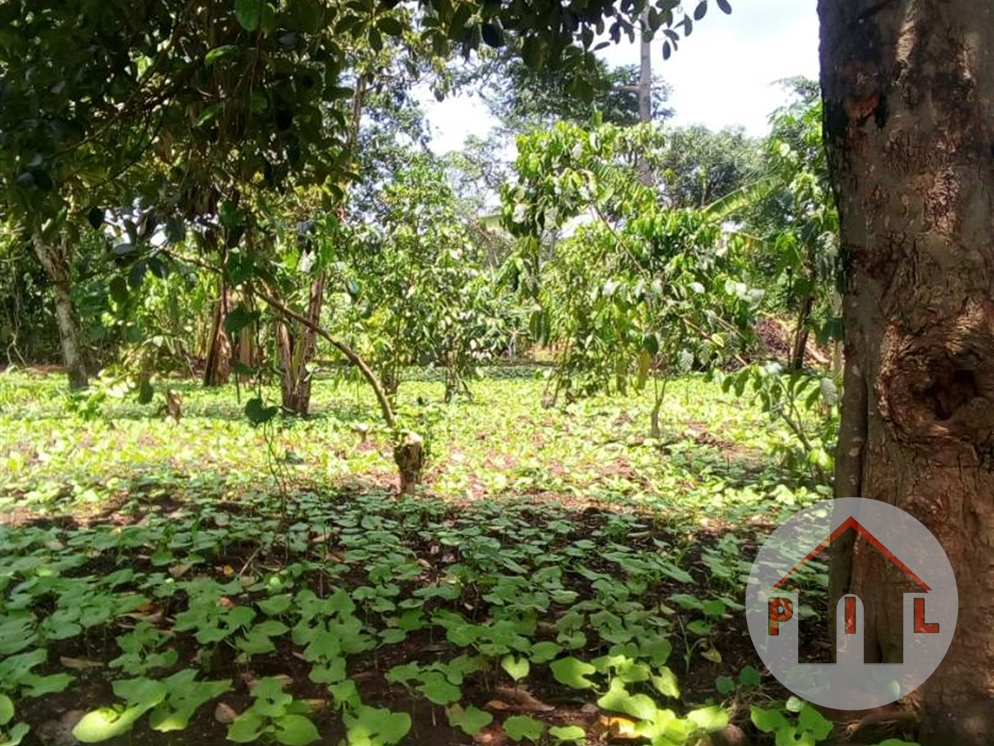 Agricultural Land for sale in Luweero Luwero