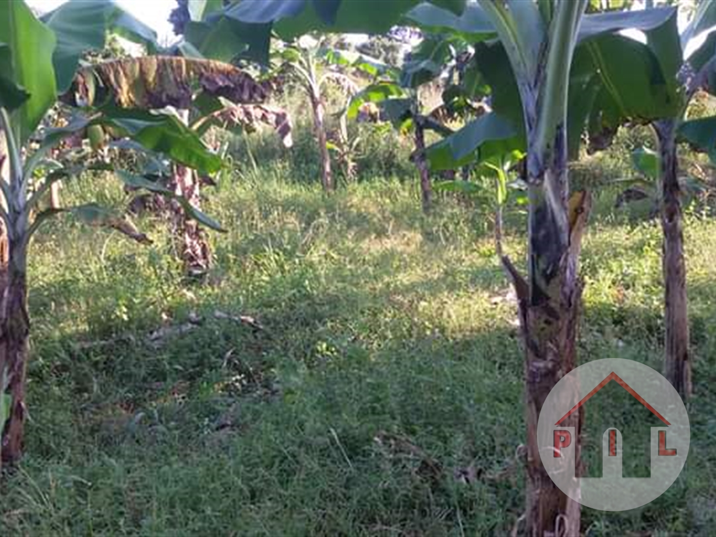Agricultural Land for sale in Nakakono Luwero