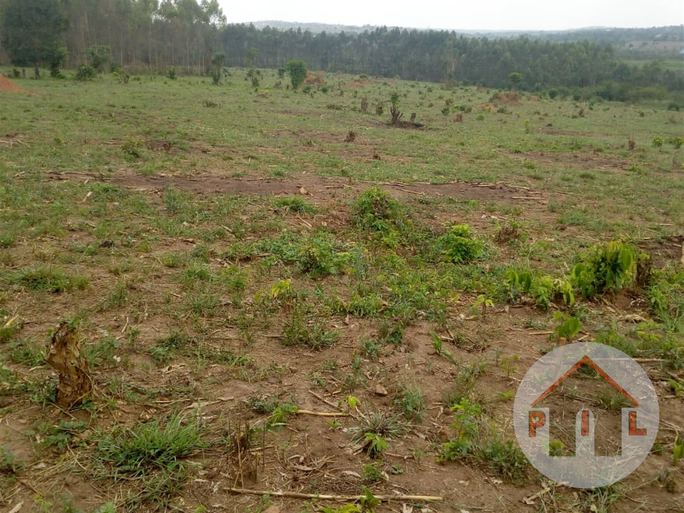 Agricultural Land for sale in Kikyuusa Luwero