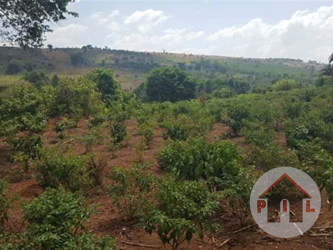 Agricultural Land for sale in Bulambuli Mbale