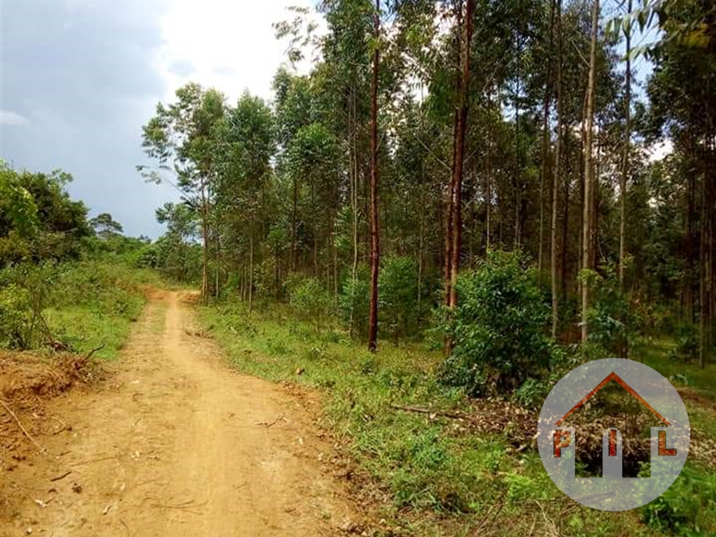 Agricultural Land for sale in Kayabwe Mpigi