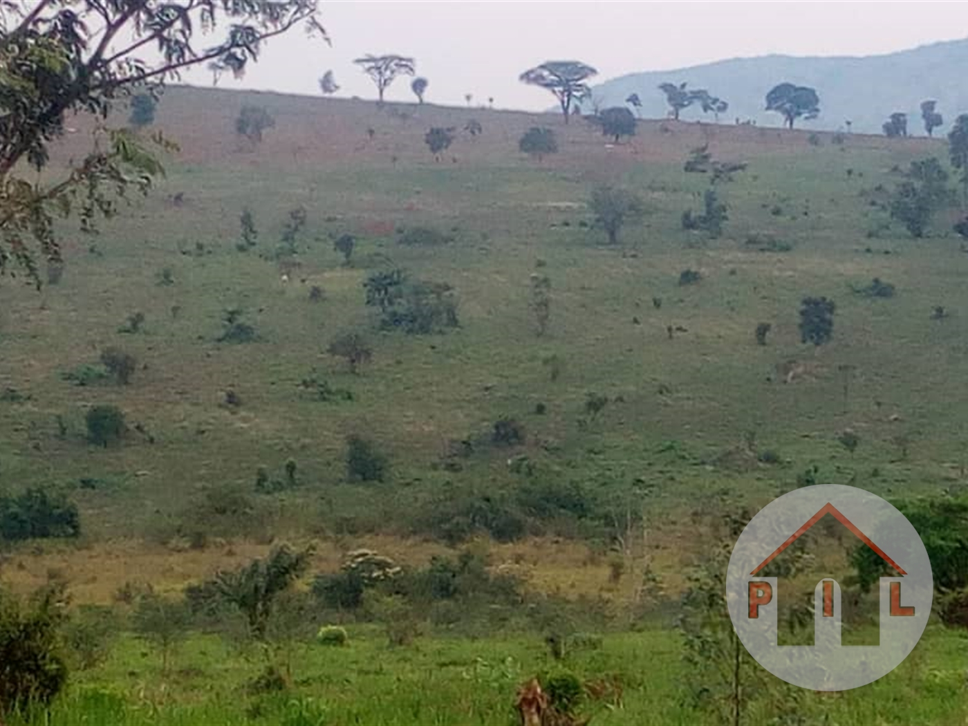 Agricultural Land for sale in Jezza Mpigi