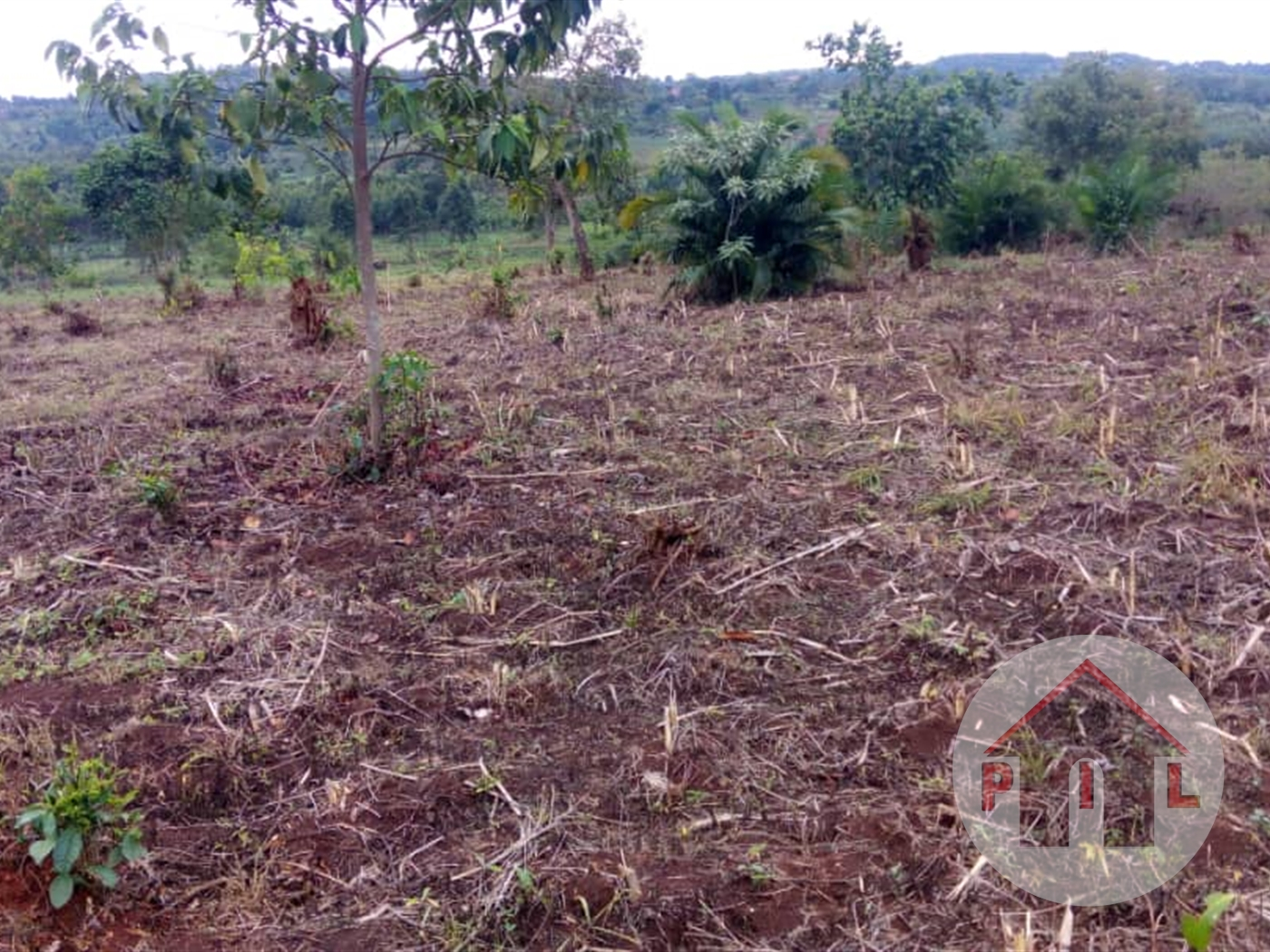 Agricultural Land for sale in Lukiizi Luwero