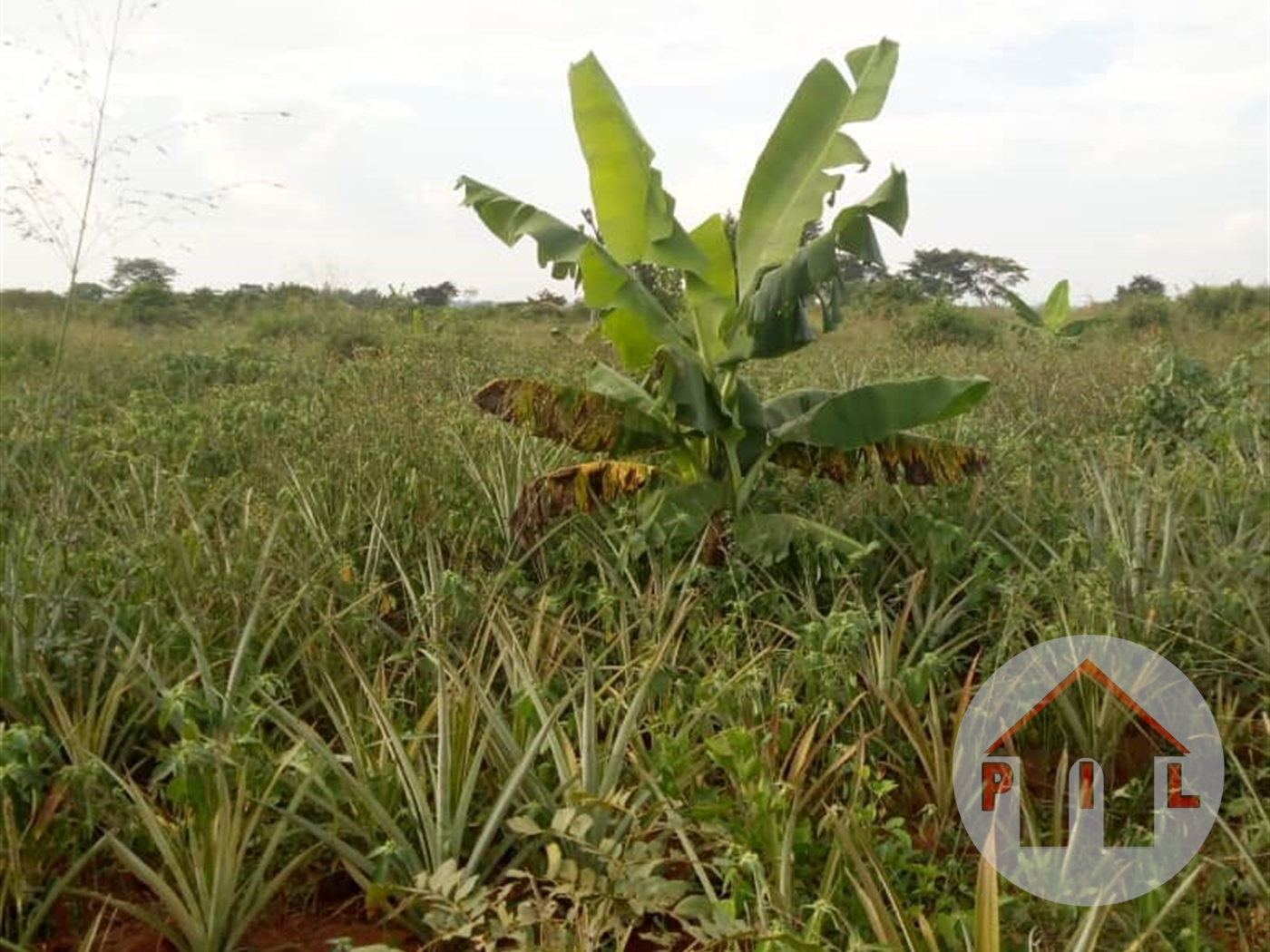 Multi Purpose Land for sale in Namulonge Wakiso