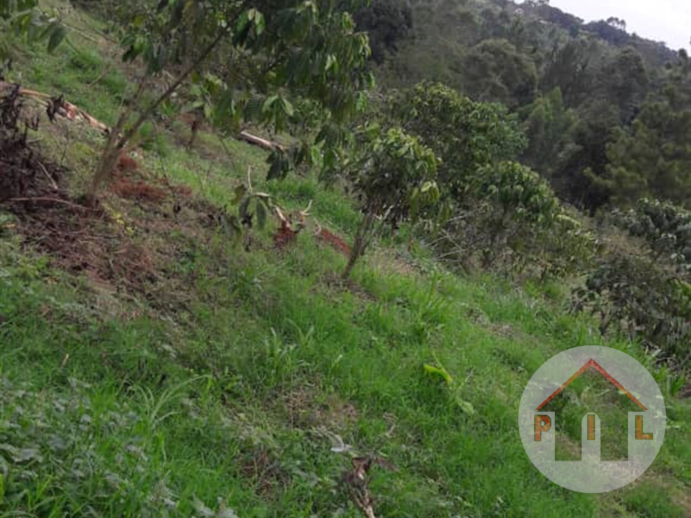 Agricultural Land for sale in Kashongi Kiruhura