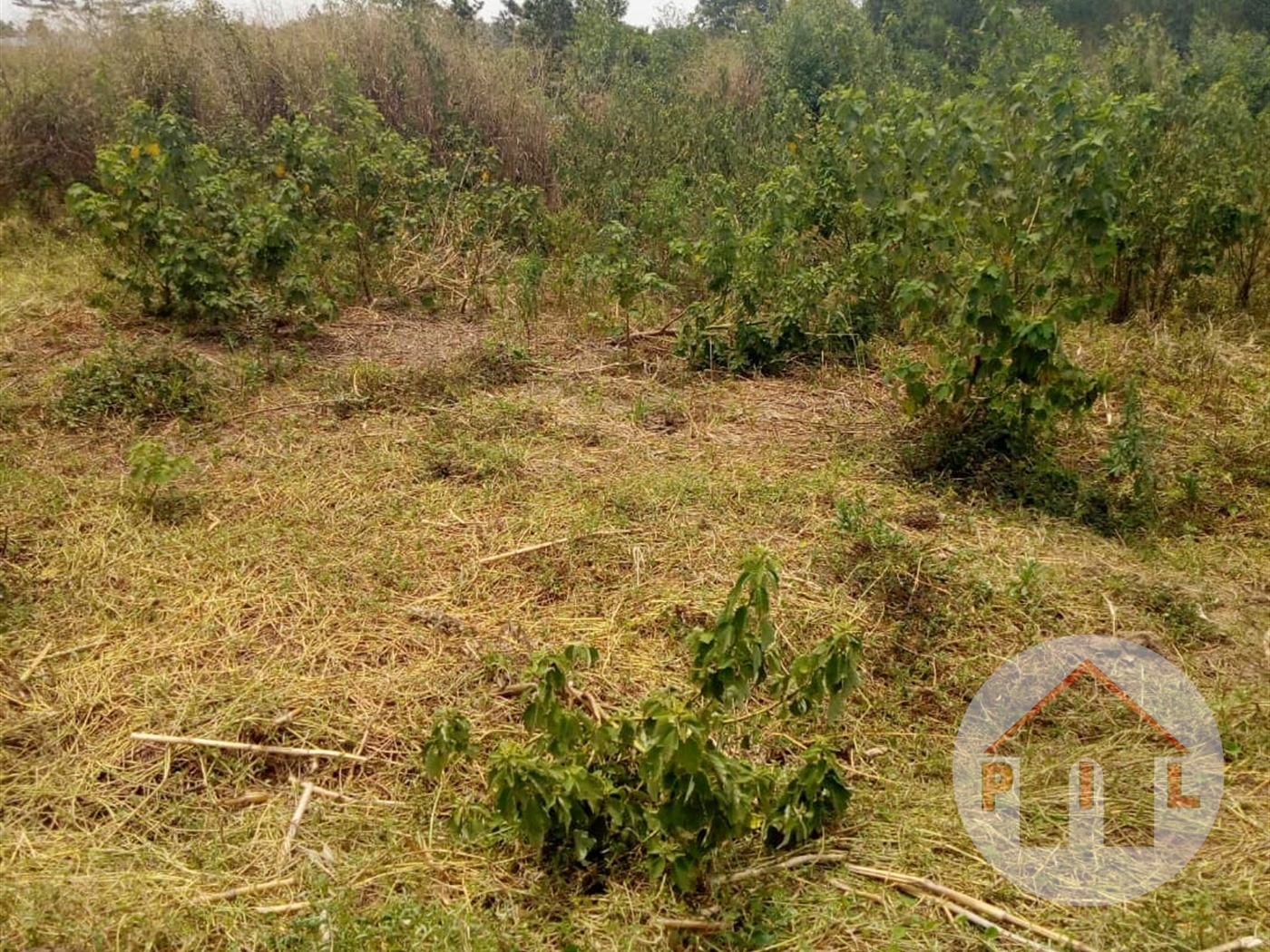 Multi Purpose Land for sale in Wakiso Wakiso