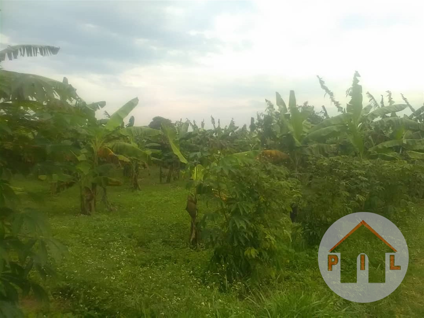 Agricultural Land for sale in Entebbe Wakiso