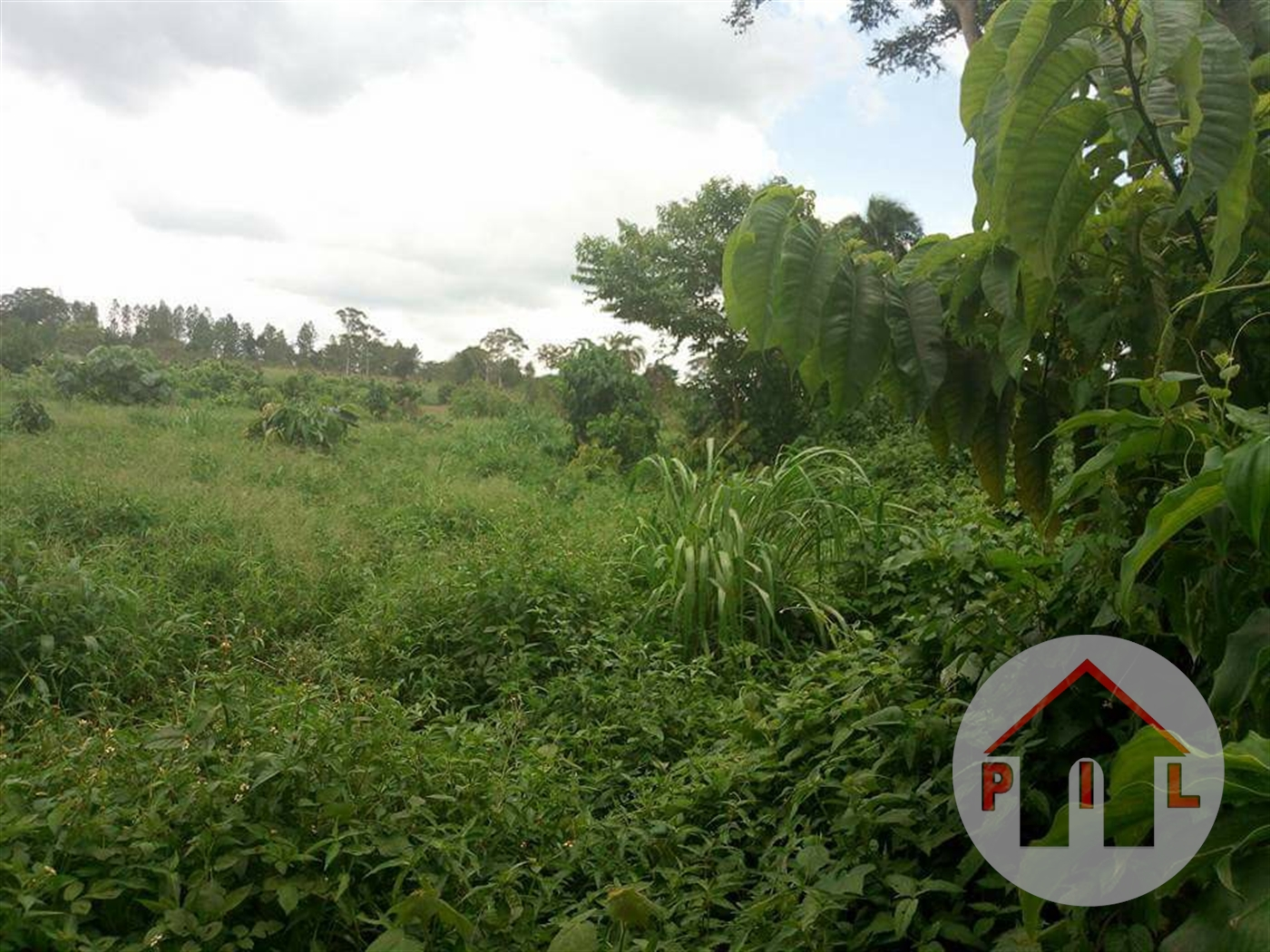 Agricultural Land for sale in Ssemuto Luwero