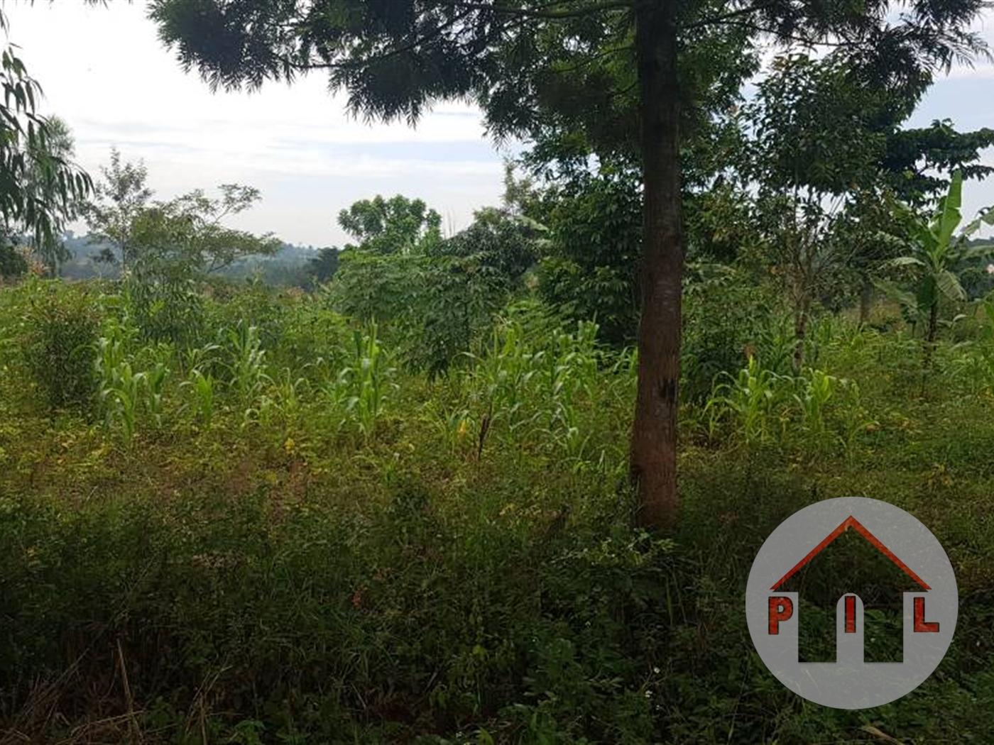 Agricultural Land for sale in Nansaka Luwero