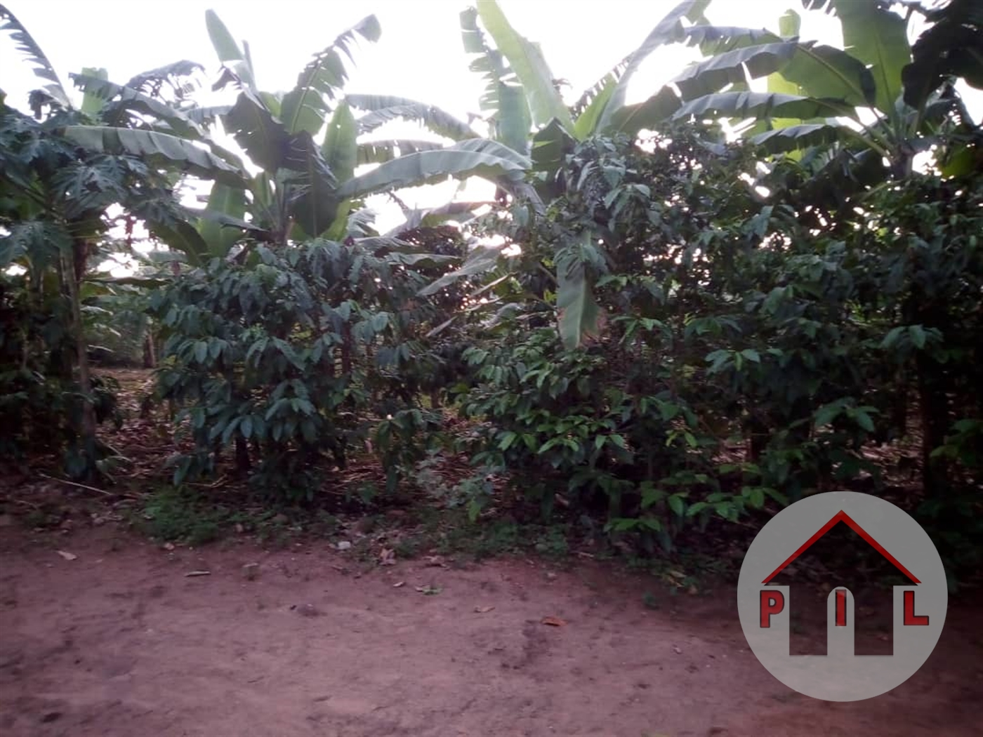 Agricultural Land for sale in Katikamu Luwero